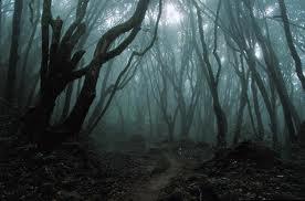 Таинственный  лес в Японии