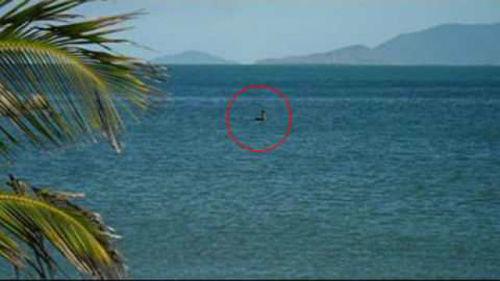 Странное существо у берегов Австралии