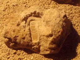 Находки которым миллионы лет