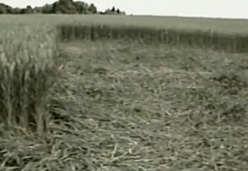 Круги на полях в Украине