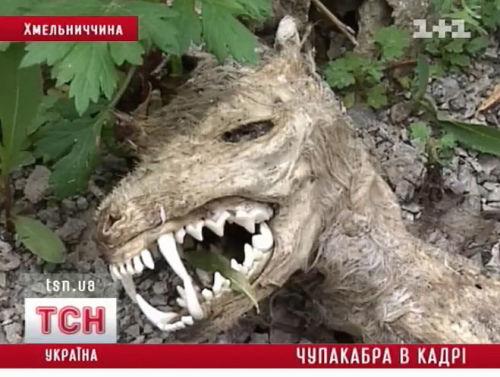 Украина чупакабра фото