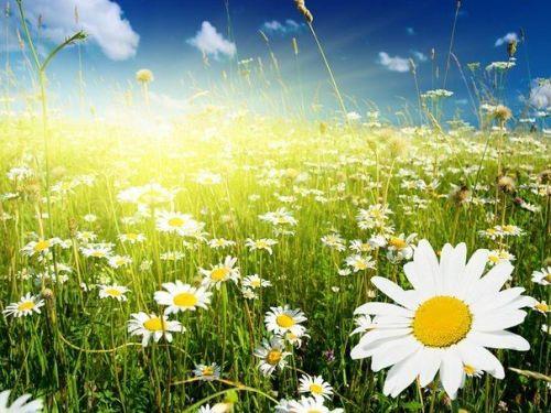 Что символизирует цветок