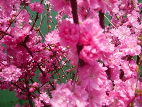 Как правильно подобрать букет цветов