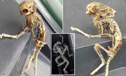 Скелет пришельца