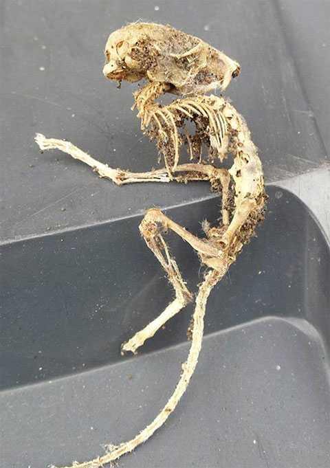 Скелет загадочного существа
