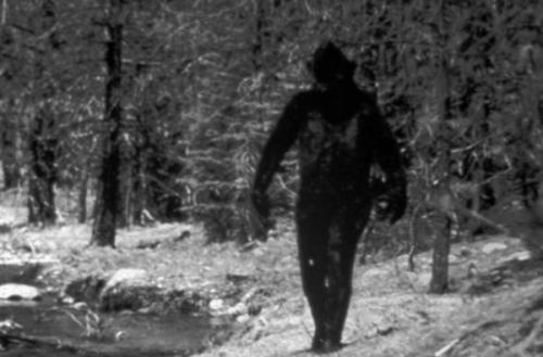 Йетти идет по лесу