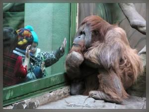 Московские зоопарки