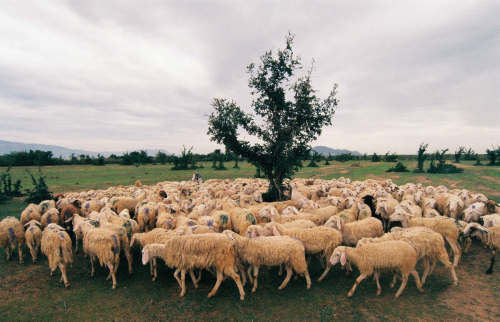 НЛО похищают овец в Норвегии