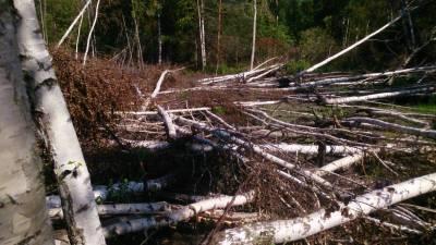 Два объекта упали в московский лес