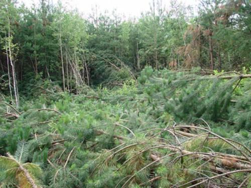 Вываленный лес в Челябинске