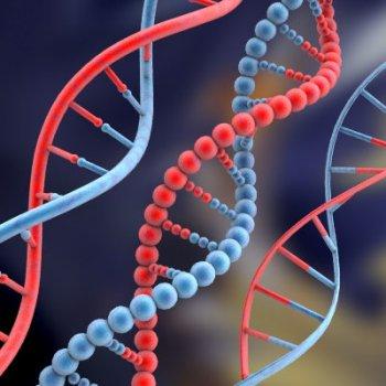 Передача ДНК
