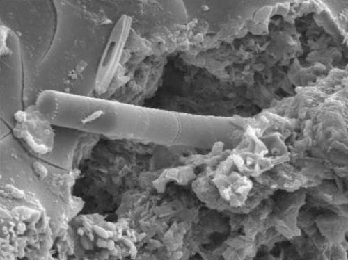 Найдена жизнь в метеорите Шри-Ланки