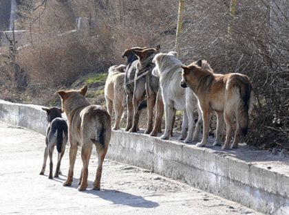 Современное развитие собак