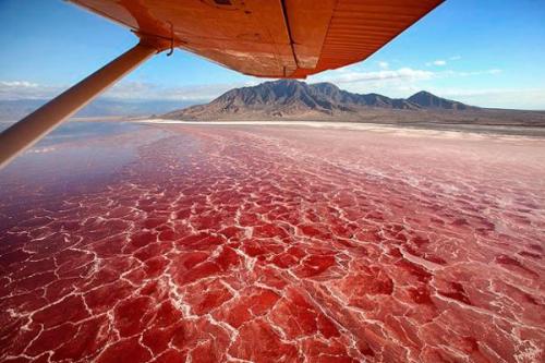 Красные воды озера Натрон