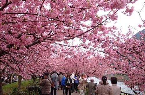 МКС и вишневые деревья