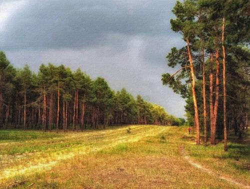 Матвеевский лес Николаева