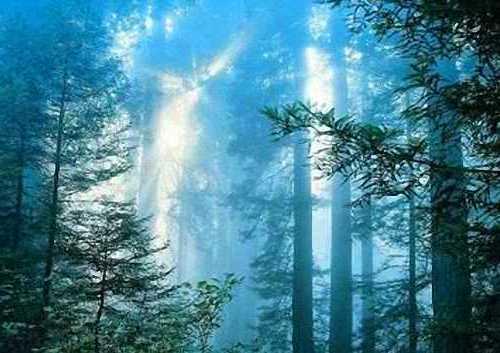 Рэндлшемский лес