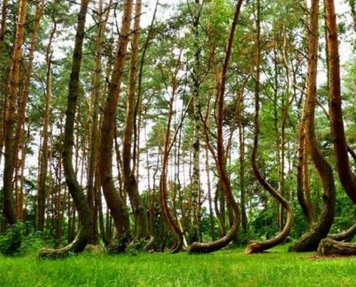 Странные деревья в лесу