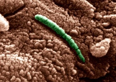Бактерии с Марса