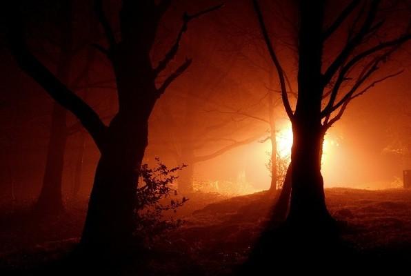 Огни в лесу